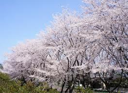 神奈川県大和市の家庭教師
